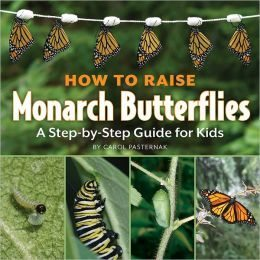 How to Raise Monarch Butterflied