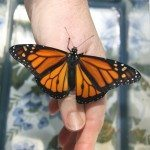 Good-bye Butterfly