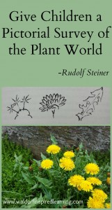 Give Children a Pictorial Survey of the Plant World