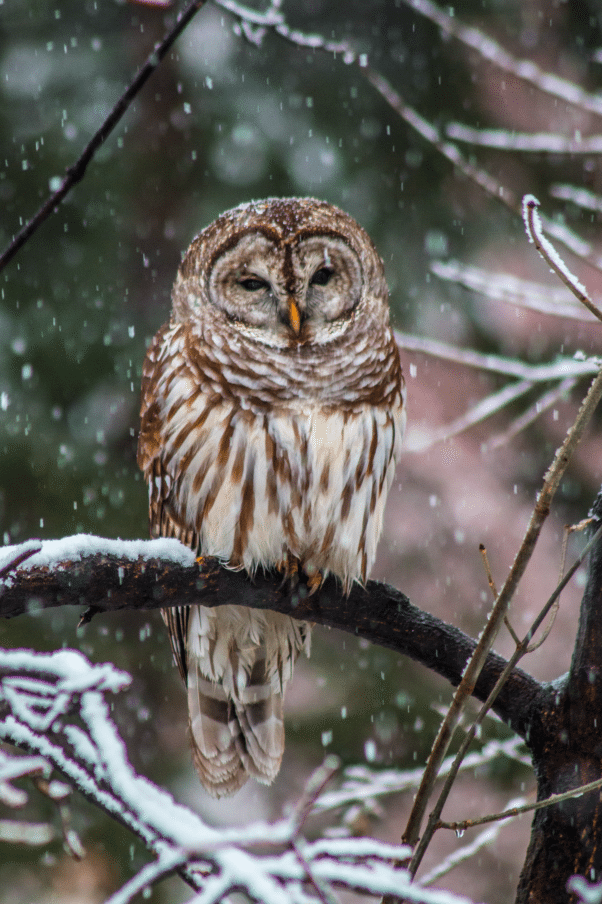 The owl who appeared in our neighbor's back yard. This moment - awe.