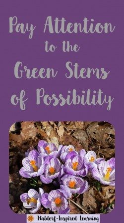 Pay Attentinon to the Green Stems of Possibility