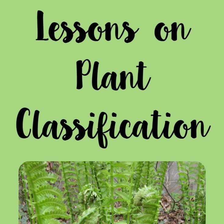 Lessons On Plant Classification Waldorf Inspired Learning